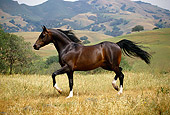 HOR 01 RK0908 24