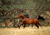 HOR 01 RK0912 04