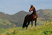 HOR 01 RK0913 01