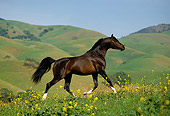HOR 01 RK0915 01