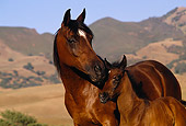 HOR 01 RK0935 08