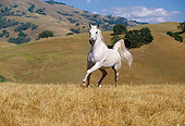 HOR 01 RK0953 01
