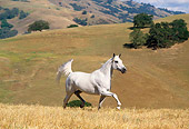 HOR 01 RK0953 14