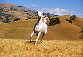 HOR 01 RK0953 22