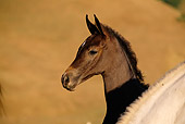 HOR 01 RK0958 02