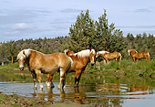 HOR 01 RK1002 08