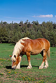 HOR 01 RK1034 02