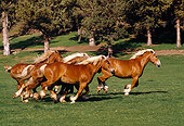 HOR 01 RK1039 07