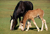 HOR 01 RK1045 18