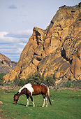 HOR 01 RK1054 04