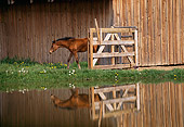 HOR 01 RK1064 04