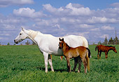 HOR 01 RK1068 01