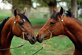 HOR 01 RK1079 04