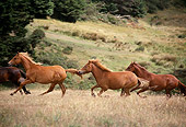 HOR 01 RK1086 02