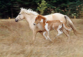 HOR 01 RK1088 07