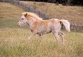 HOR 01 RK1090 05