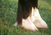 HOR 01 RK1116 01