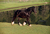 HOR 01 RK1117 28