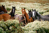 HOR 01 RK1133 08