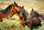 HOR 01 RK1133 17