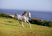 HOR 01 RK1147 02