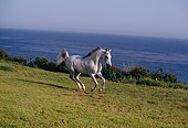 HOR 01 RK1147 03