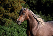 HOR 01 RK1152 01