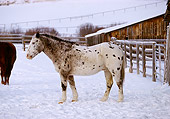 HOR 01 RK1173 02