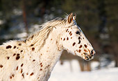 HOR 01 RK1194 02