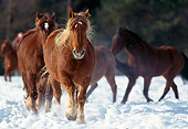 HOR 01 RK1199 03