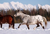 HOR 01 RK1205 03