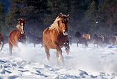 HOR 01 RK1207 15
