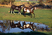 HOR 01 RK1261 04