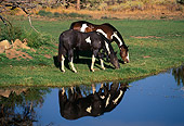 HOR 01 RK1261 10