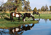 HOR 01 RK1264 18