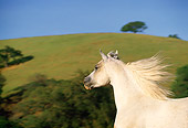 HOR 01 RK1274 02