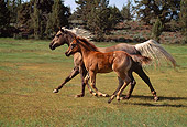 HOR 01 RK1310 01