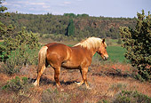 HOR 01 RK1327 02