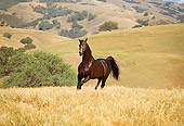 HOR 01 RK1333 13