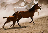 HOR 01 RK1334 21