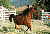 HOR 01 RK1347 11