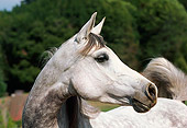 HOR 01 RK1368 05
