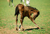 HOR 01 RK1394 01