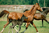 HOR 01 RK1395 08