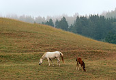 HOR 01 RK1400 01