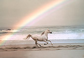 HOR 01 RK1417 50
