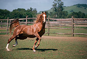 HOR 01 RK1438 24