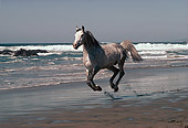 HOR 01 RK1440 17