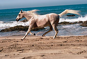 HOR 01 RK1441 01