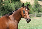 HOR 01 RK1442 13